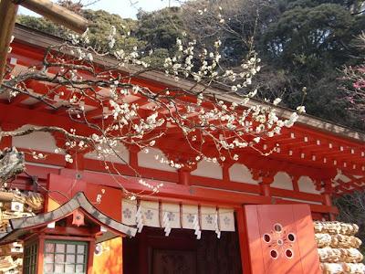 荏柄天神社の梅(古代青軸)