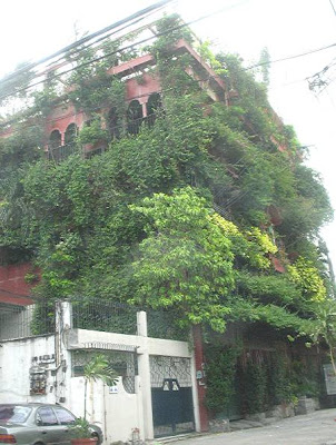 house covered in vines and other plants
