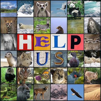 Peste 800 de specii de animale și plante au dispărut de pe Terra