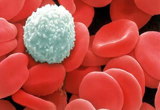 Glóbulos vermelhor (hemácia)