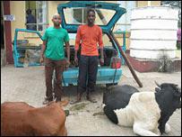 Roubando Vacas