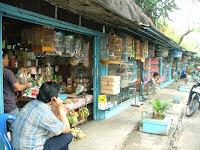 hewan dan juga menjual hewan seperti kelinci kucing dan