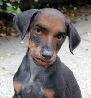 Los perros mas feos del mundo...