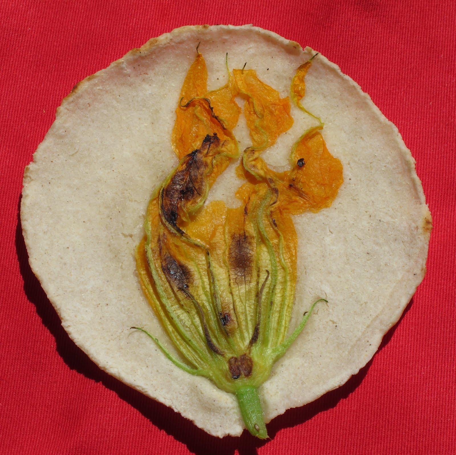 how to make fresh corn tortillas