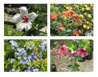 Produccion contamos con una amplia producci n de plantas for Produccion de plantas ornamentales