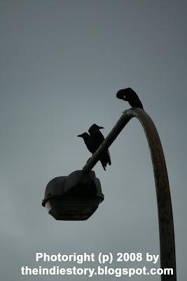 Cara Mengenali dan Trading dengan Pola Tiga Burung Gagak Hitam di Olymp Trade