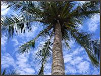 Redang Coconut