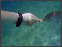 Redang Feed Fish