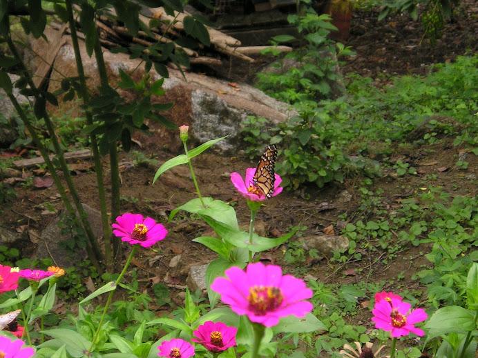 FOTO 22: Flores