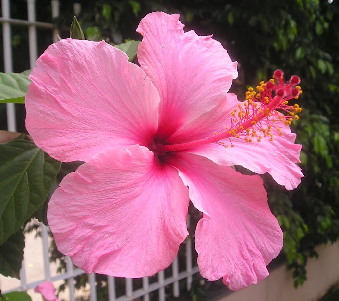 FOTO 20: Flores