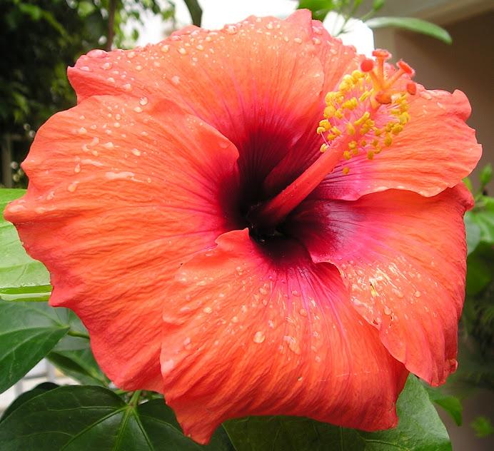 FOTO 21: Flores