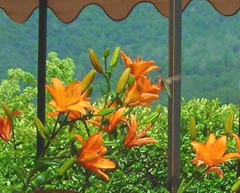 [lilies+2+003.jpg]