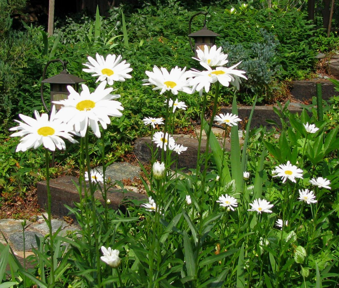 [dave+flower+059.jpg]