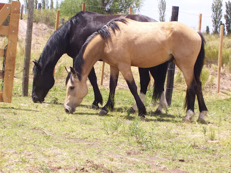 doma de caballos