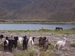 laguna El Sosneado