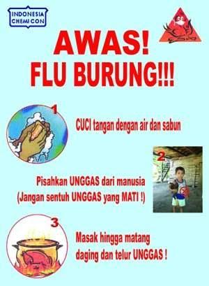 Poster Poster Flu Burung