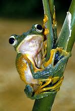 Frog News!!