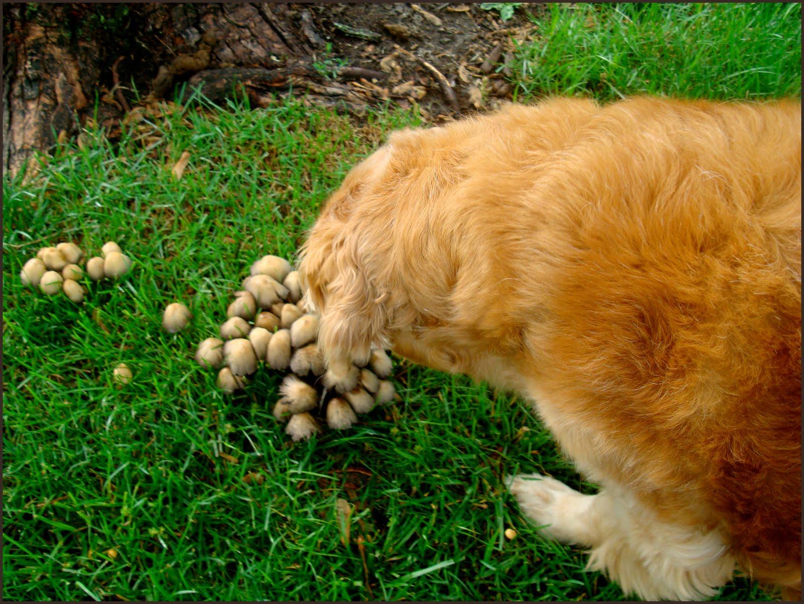 Is Dog Poop Good Garden Fertilizer