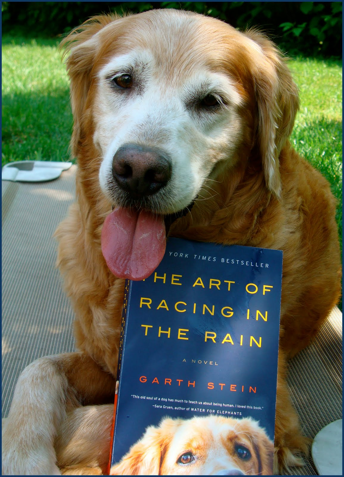 The Art Of Racing In The Rain: Book Review/Giveaway: The Art Of Racing In The Rain