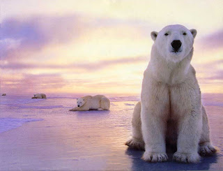 Polar bears taking a break. They depend on our good will for their survival