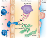 Bağışıklık Sistemi Savunması Deri de Başlar