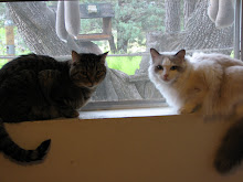 Birds at my window; cats on the sill