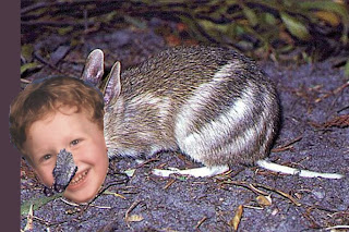 The Jared subspecies of the rabbit-eared bandicoot