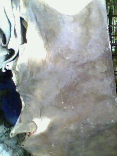penjualan  kulit sapi dan kerbau 73017c5c2e