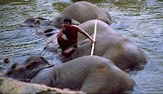 RIOLTA  LANKA HOLIDAYS  Pinnawela Elephant Orphanage