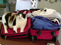 Kitty has a way of saying she'd like to go along