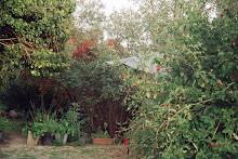 Do  Jardim