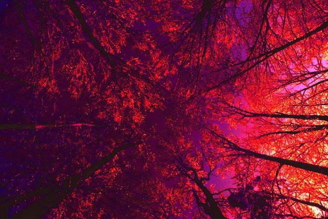 2_LANDSCAPE_ Infared Overhead Trees