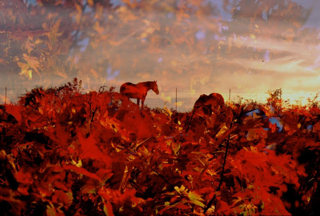1_LANDSCAPE_ Red Sunset w/ Horses