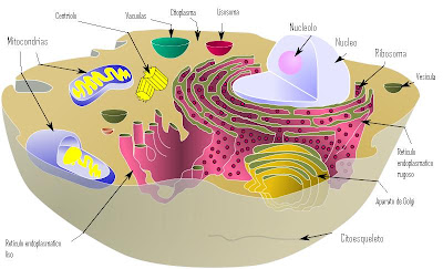 Biología Latina Estructura De Una Célula Eucariota