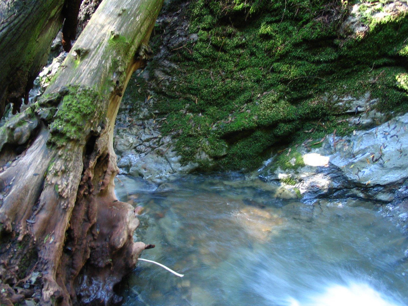 [Mt.+Tamalpais+State+Park+-+Matt+Davis+Steep+Ravine+Loop+063.jpg]