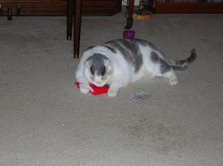 Catnip frenzy