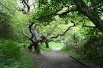 Culzean Castle Park, Scotland
