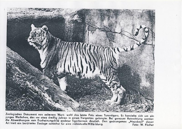 """tiger conservation genre analysis of a """"a lot of people hailed this as a huge success in tiger conservation,"""" says rabinowitz """"in reality, it was a huge success in assessing tiger numbers."""