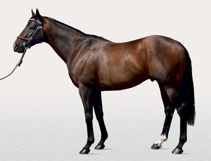 librettist stallion