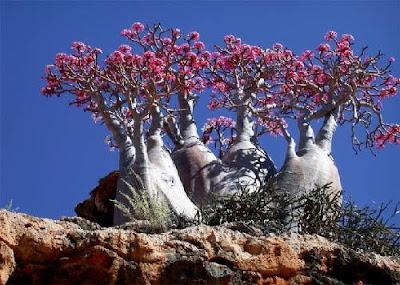 地球上最像外星的地方 - 葉門索科特拉島
