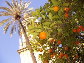 Patio de los Naranjos, Córdoba(España)