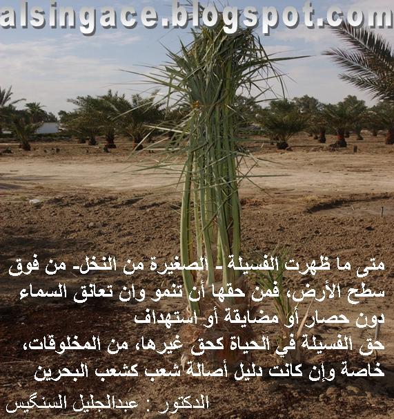 Al-Faseela           الفــسـيـلة