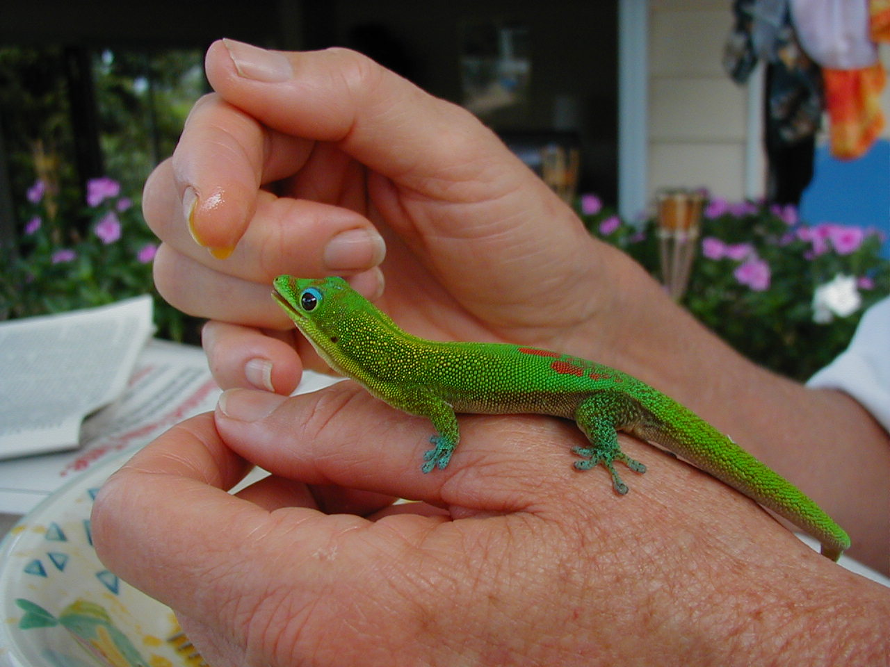 Snow Crash: More Than You Ever Wanted To Know About Geckos