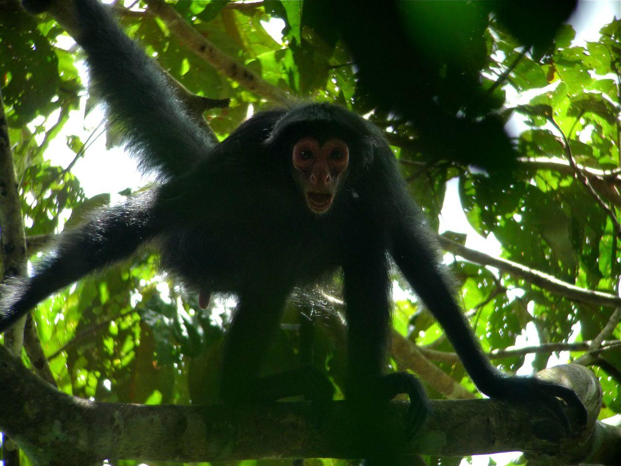 Bill Of The Birds On Blogspot Birding In Guyana Part 5