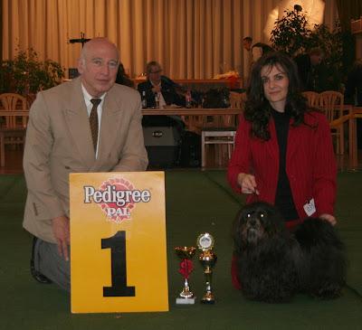 PEDORO Havaneser Rüde in Neußen Ausstellung best male best of breed