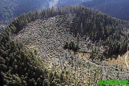 [impactos-de-la-tala-ilegal-sobre-el-gran-bosque-de-agua-en-zempoala-estado-de-mexico-foto-cortesia-greenpeace-mexico.jpg]