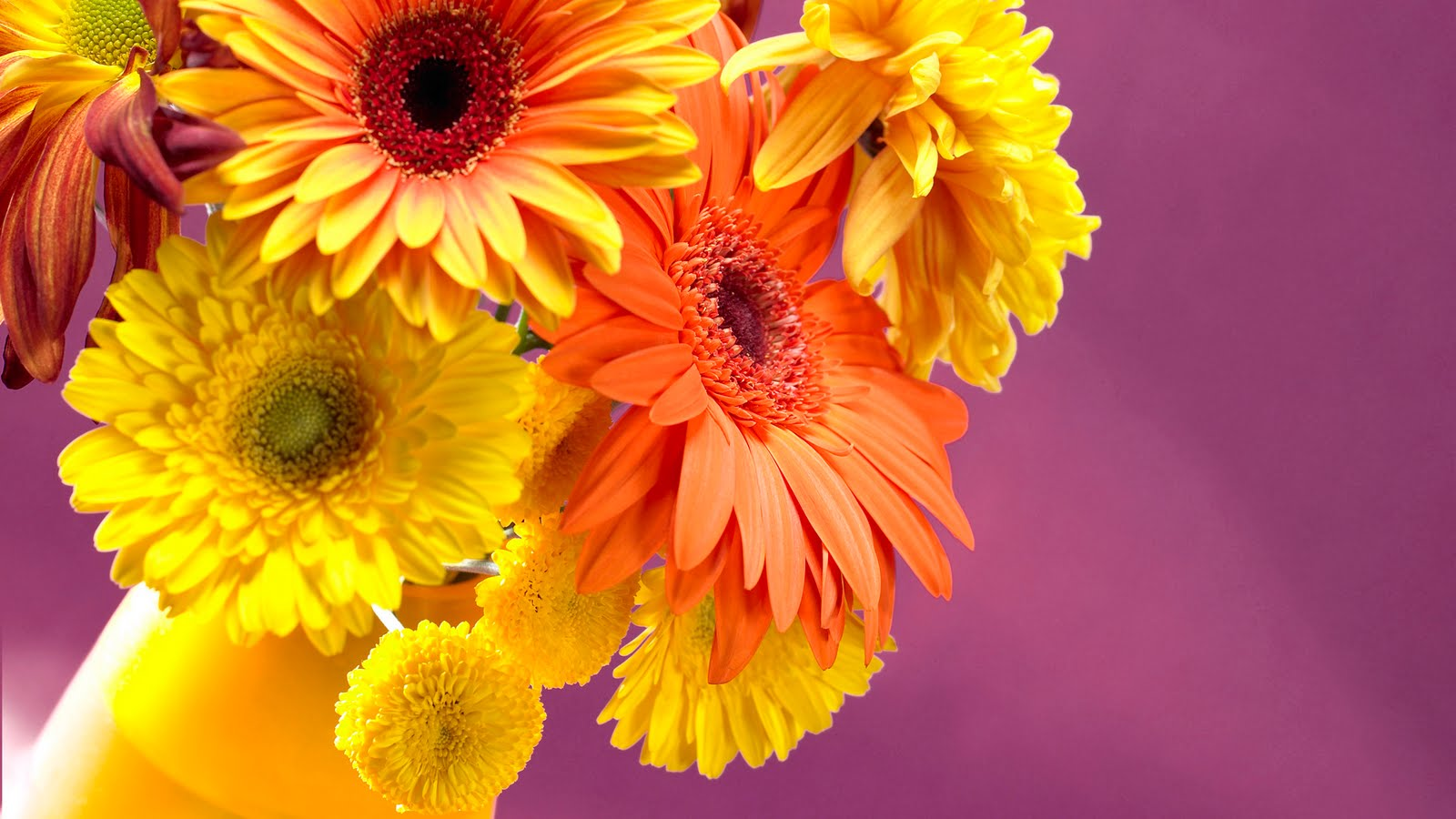 Free Colorful Flower Wallpaper Downloads: Jaspreet Rekhi: 40 Colorful Flowers Wallpapers Full HD