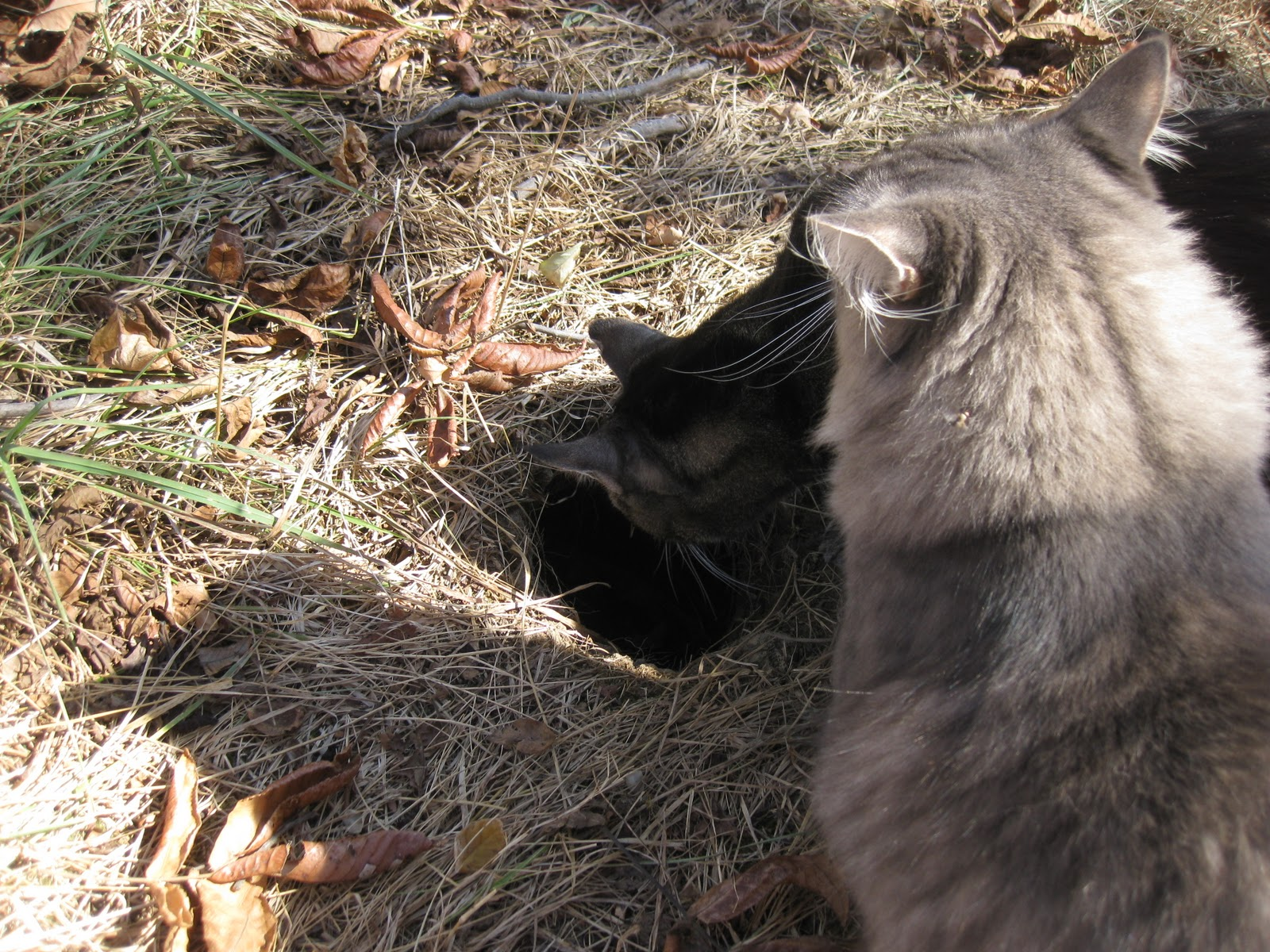 Indiana Country: Kitties check out giant hole   probably