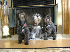 Schnauzers by the Hearth