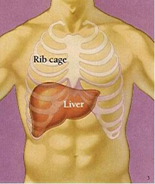Health Tips: Liver damage